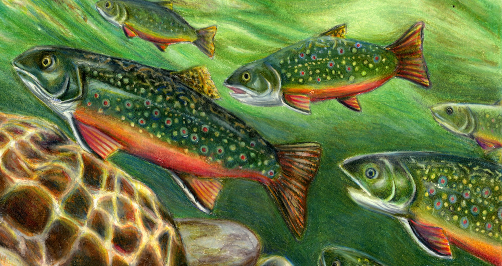 Warren students place in fish art contest