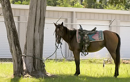Tired of high gas prices? Get a horse!