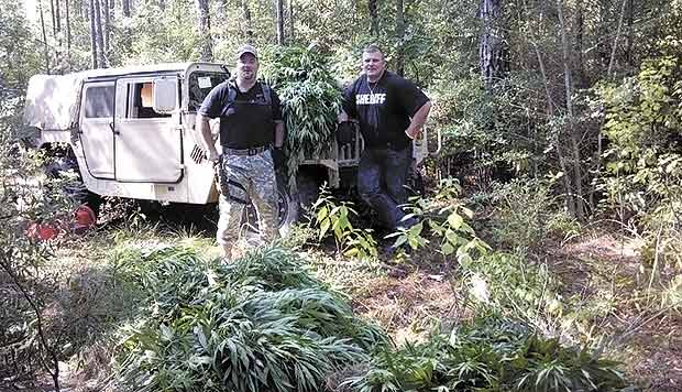 2,000 marijuana plants growing near Harmony